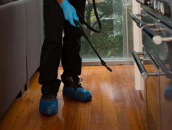 Ant control: A pest controller spraying against ants in a house